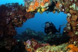Scuba diving near thonga beach lodge