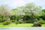 Game Viewing by By Boat, Rufiji River Camp