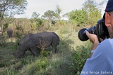 Rhinos on game drive