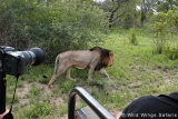 5-day Kruger Park Safari open vehicle game drive