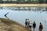 Mwaleshi - walking safaris 2