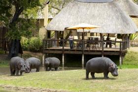 Hippo Visitors at Arathusa Safari Lodge