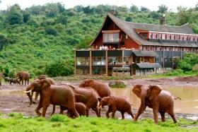 The ark elephants, Aberdare, Kenya
