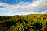The ark forest view, Aberdare, Kenya