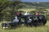 Kicheche-bush-camp-game-drive-zebra