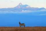 Zebra framed by Mount Kenya, Laikipia