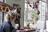 Surprise visitor for breakfast at giraffe manor