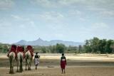 Camel safari at Sasaab