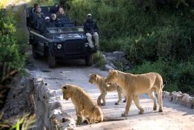 Lion Sands Tinga game drive with lions