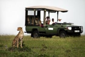 Game drive, Maasai Mara plains, Kenya