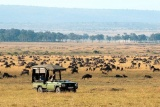 Game drive with herds, mara plains camp