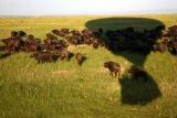 Hot-air-balloon-safari, mara plains camp