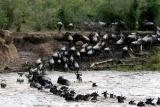 Wildebeest migration, mara plains camp