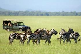 Game drive - ol Donyo Lodge, near Amboseli, Kenya