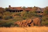 Ol donyo lodge elephant visitors