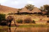 Tortilis Camp - elephant visitors