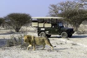 Ongava Game Drive, Namibia