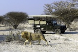 Game Drive at Little Ongava