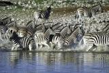 Ongava lodge zebra da