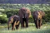 Damaraland elephant family da