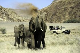 Doro Nawas Camp - Desert Elephants on Game Drive