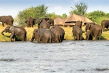 Elephants visit at Chobe Savanna Lodge