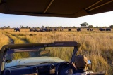 Game Drive, Namushasha River Lodge, north-eastern Caprivi, Namibia