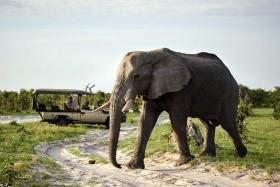 Savute elephant camp game drive