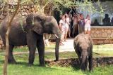 Lunch guests at tarangire safari lodge
