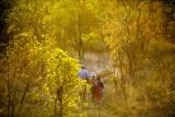 Tarangire treetops bush walk