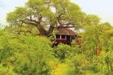 Tarangire treetops tree house