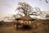 Tarangire treetops tree house lit inside