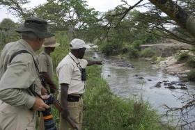Serengeti Migration Camp, hippos