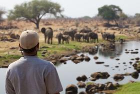 Elephant on the river's edge at Ruaha River Lodge