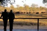 Buffalo visitors