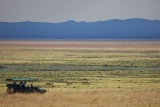 Game viewing on the plains at Katavi Wildlife Camp