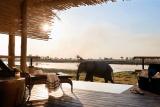 Elephant visitor, Eagle Island Lodge
