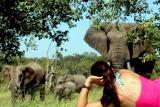 Watching ellies, baobab ridge