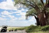 Baines' Baobabs, near Nxai Pan