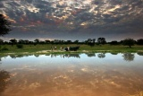 Sunset Game Drive at Elephant Plains Game Lodge