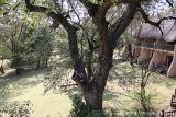 Chobe Safari Lodge gardens