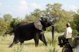 Kwando Lebala elephant on game drive, Botswana