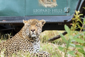 Leopard Hills Game Drive