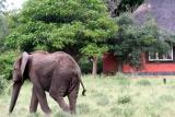 Mohlabetsi family room with elephant