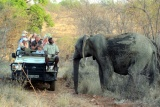 Mohlabetsi game drive, elephant