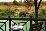 Protea Hotel Kruger Gate Elephant