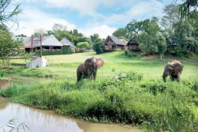 Elephant Whispers Residents at Hippo Hollow