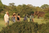 Plains Camp Walking