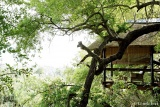 Londolozi Tree Camp Deck