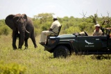 Elephant on game drive, Ngala Safari Lodge
